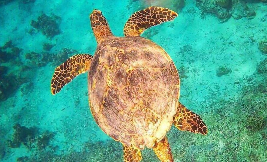Swimming with turtles in Gili T