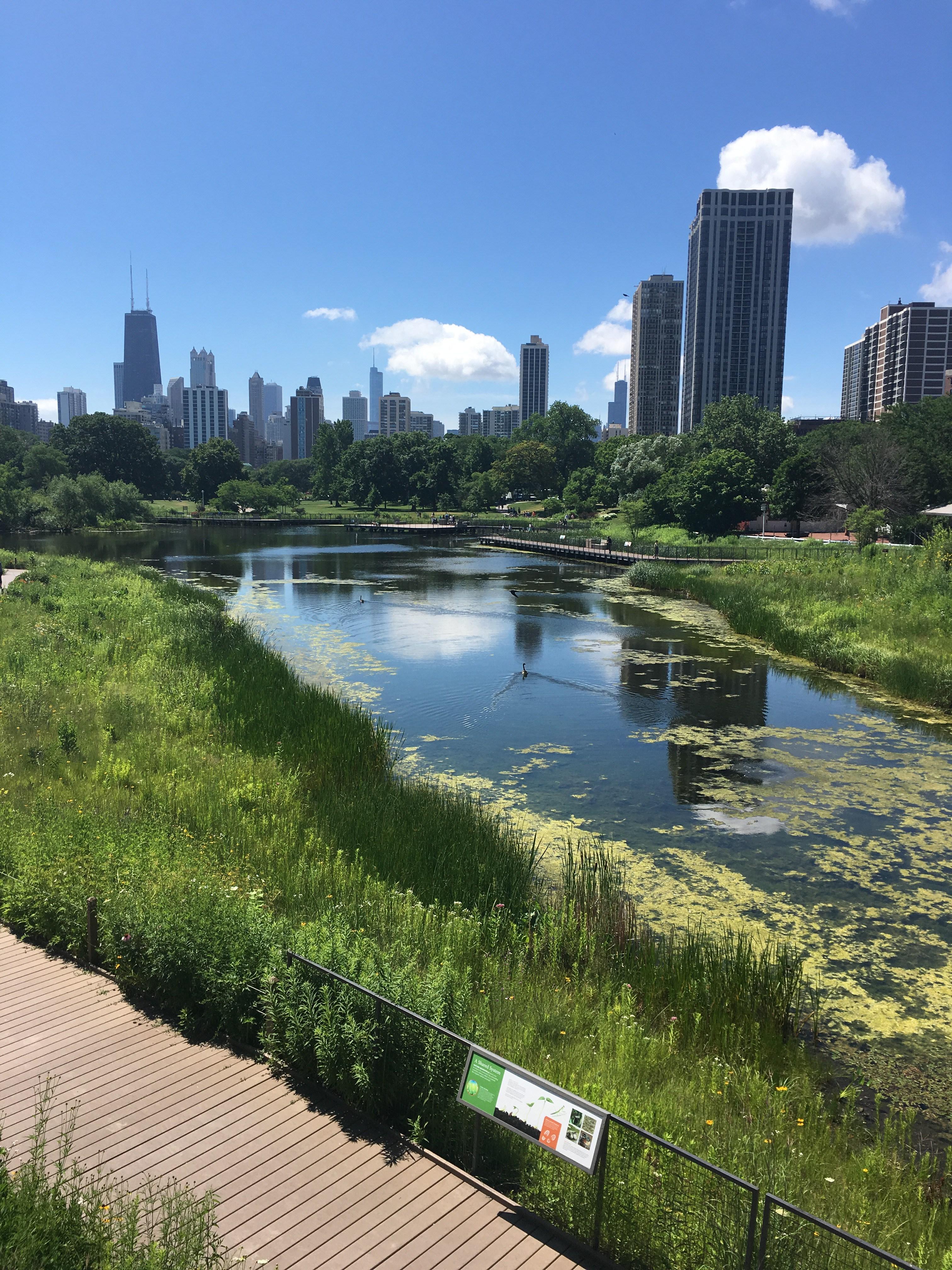 Chicago - Danielle