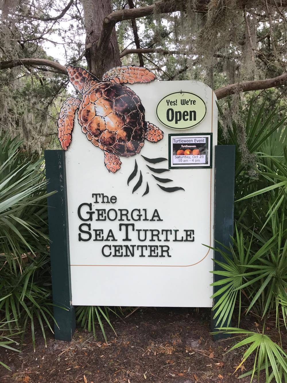 The Georgia Sea Turtle Center