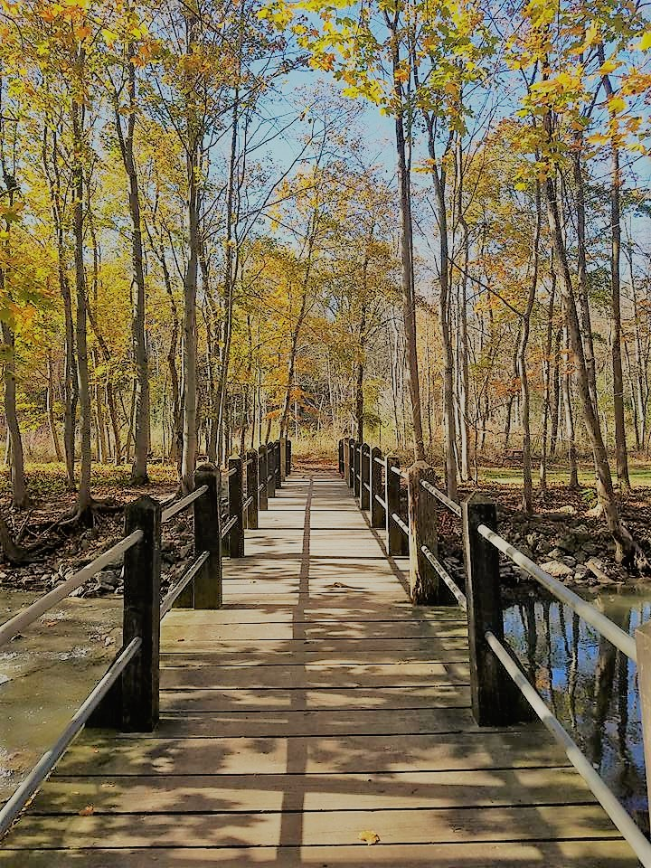 Petrifying Springs Park - Miranda