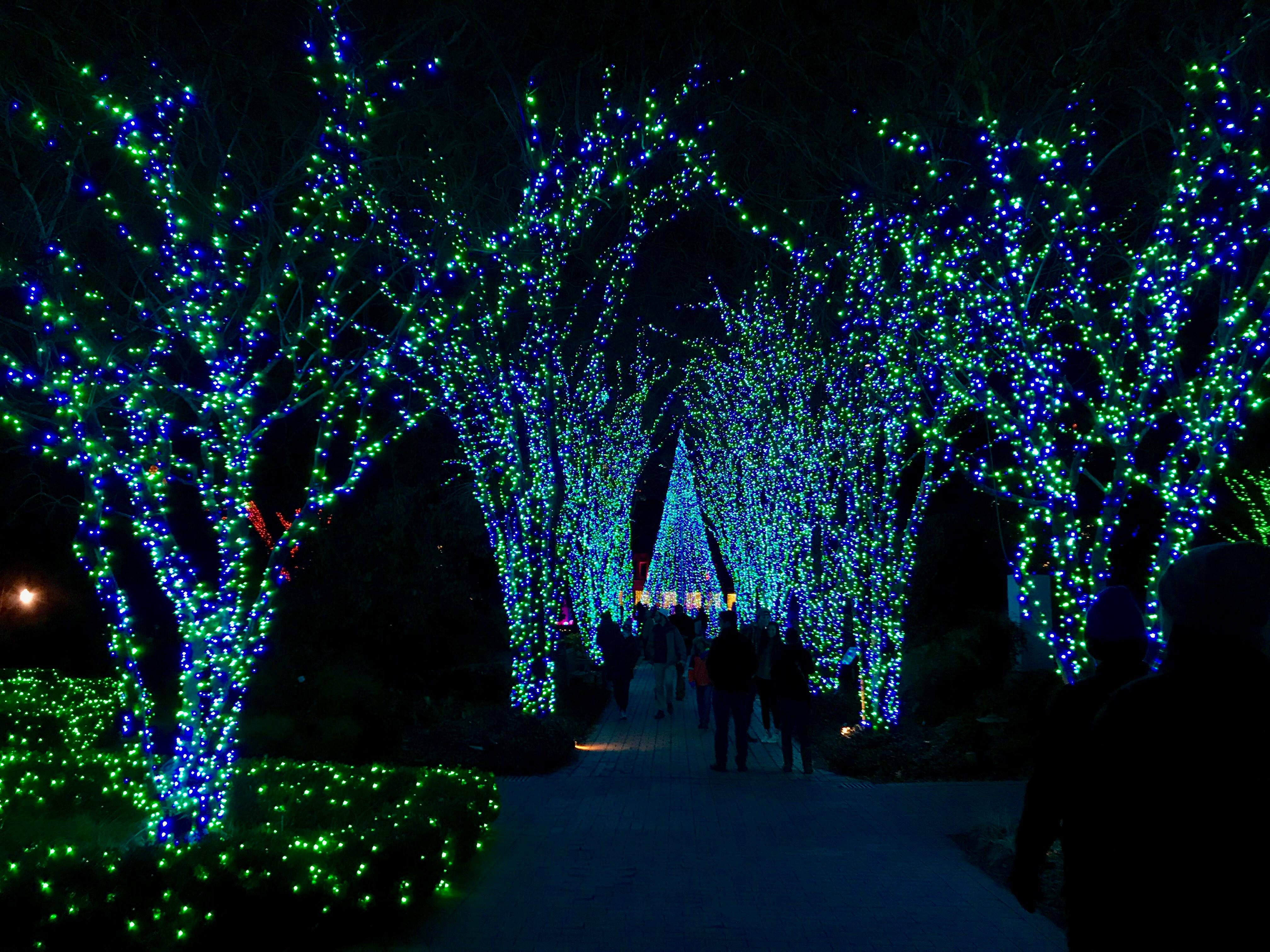 Pretty Pathway of Lights