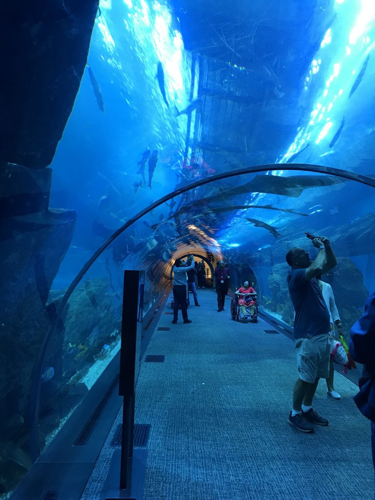 Walking through the aquarium - Dubai