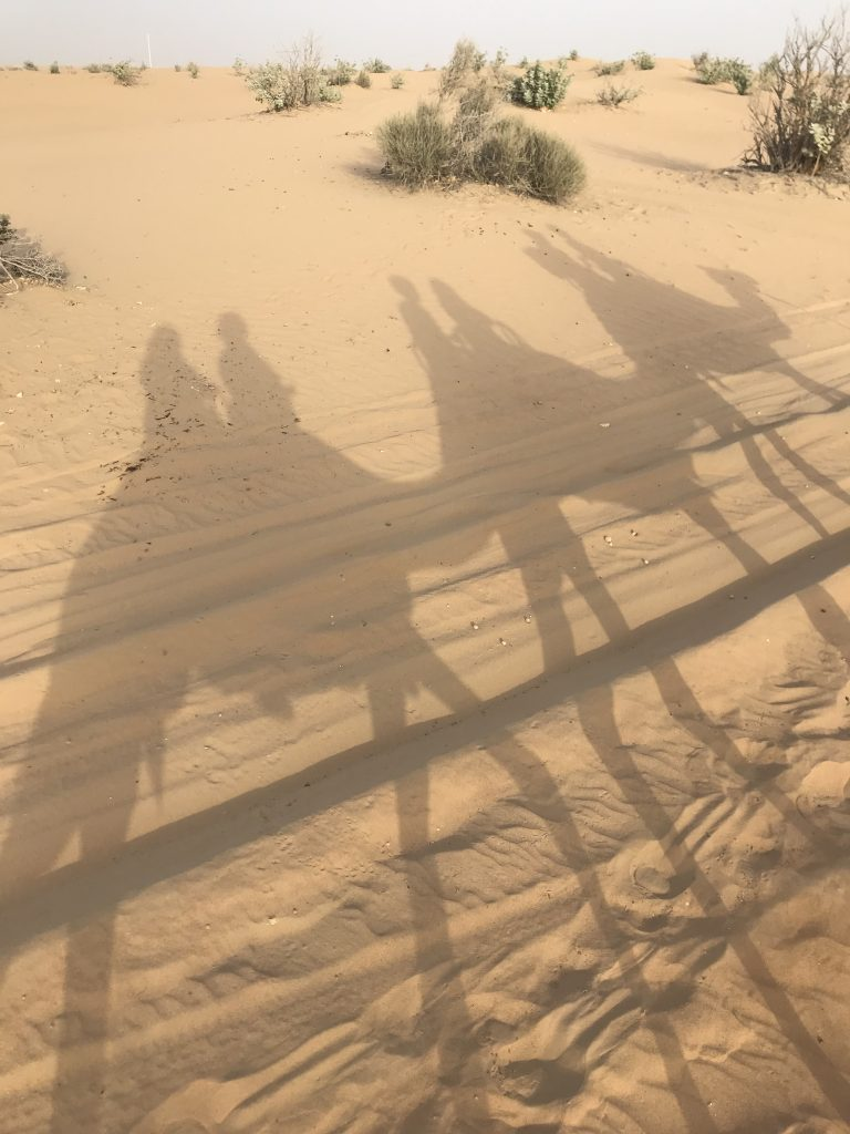 Sunset camel ride through the desert - Dubai