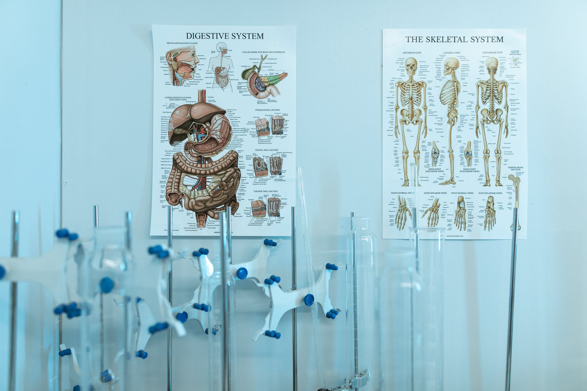 Stock picture of a room for doctors and/or nurses that has two posters on the wall. One poster is the skeletal system and the other is the digestive system